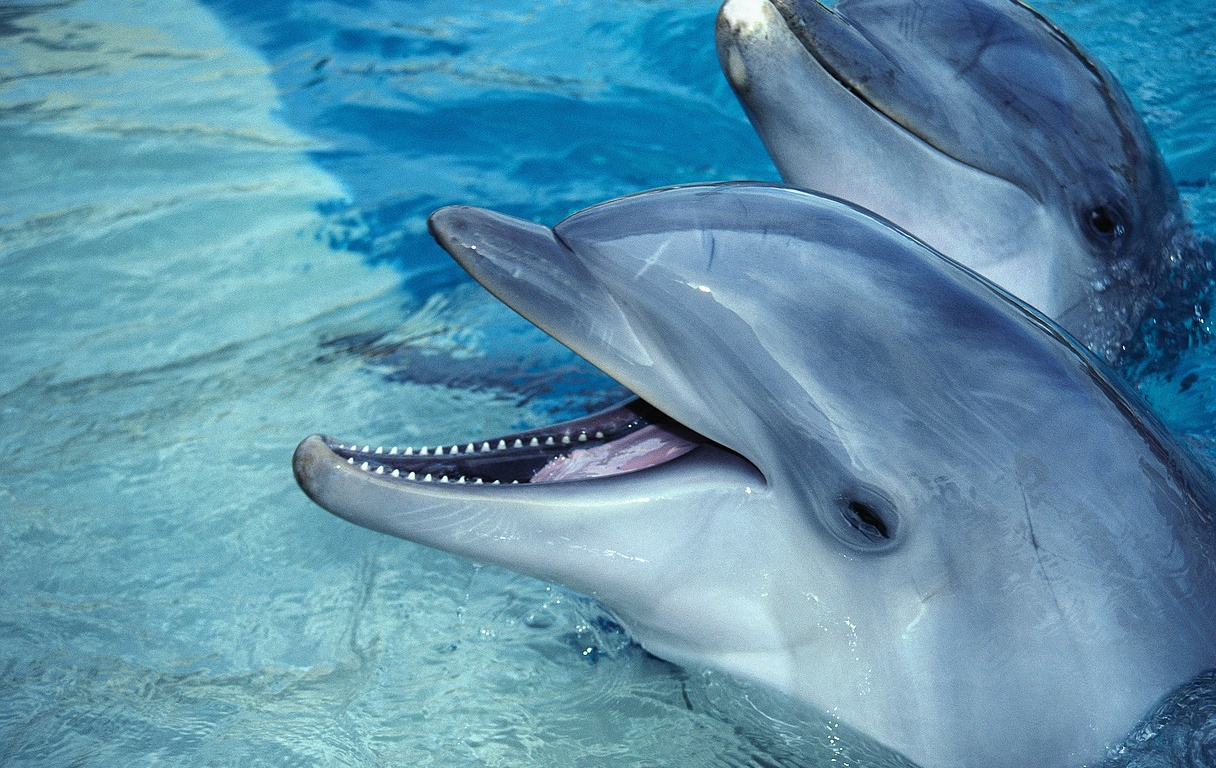 an overview of the dolphins