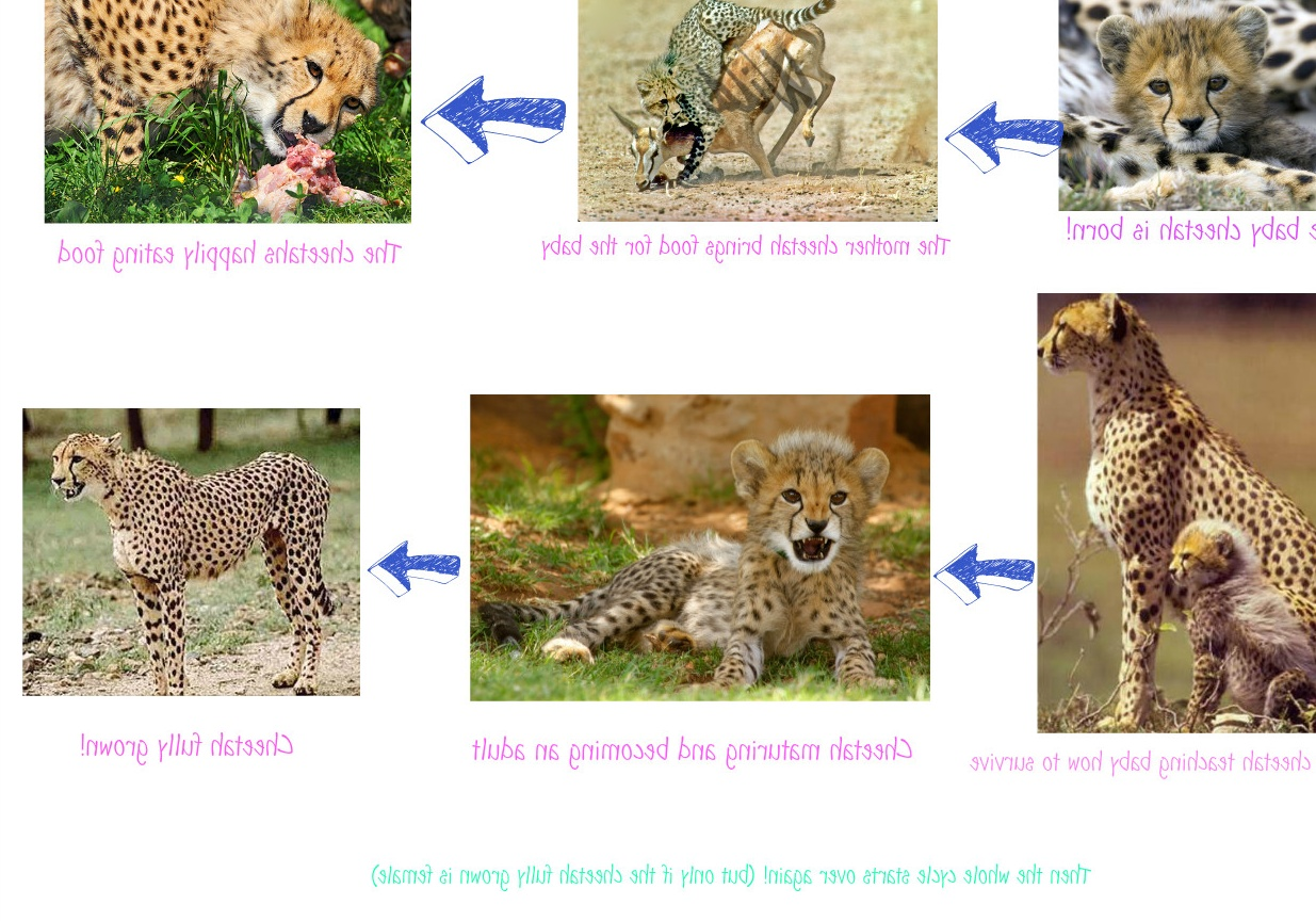 Cockapoo additionally Elephant Essay also Miniature Pinscher additionally Lemur besides Parakeet Pictures. on animal life span