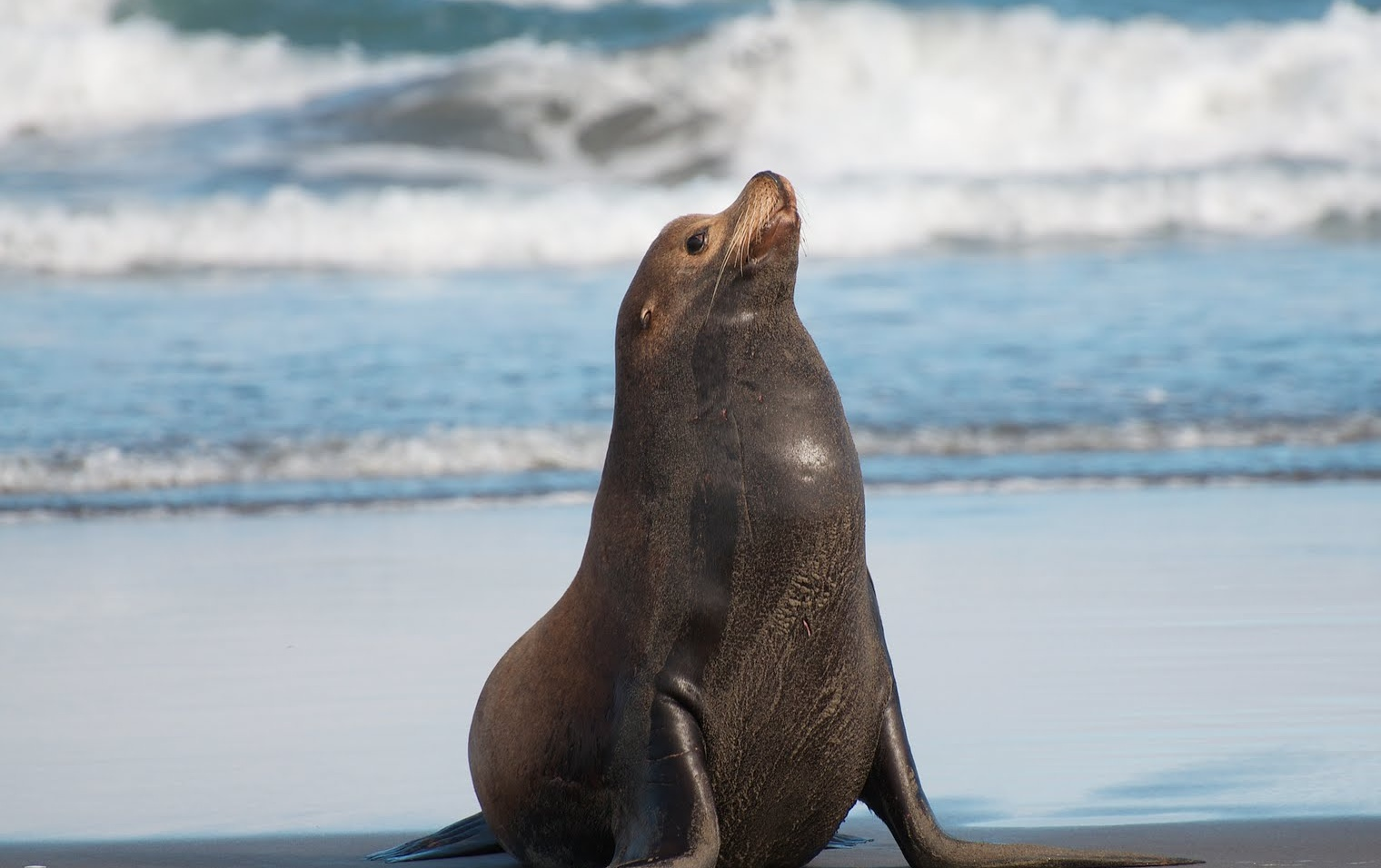Sea Lion Pictures on Animal Picture Society