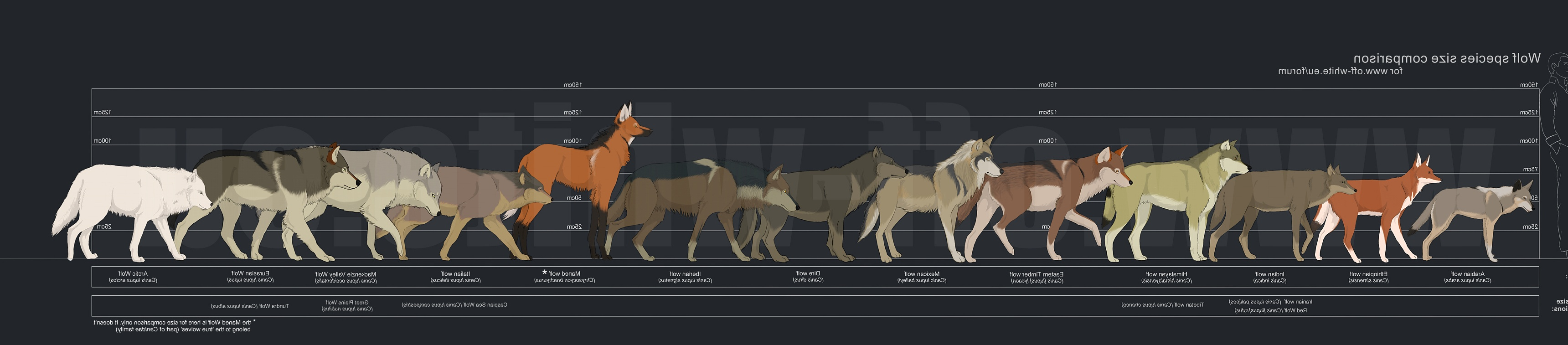 Timber Wolf Size Pictures . Quality Images on Animal ...